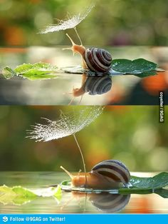 Snail appears to hide from weather. So cute