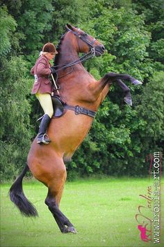 Amazing control and calm by the rider.