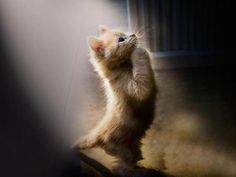 Kitty Prayer - animal, cat, kitty, Prayer