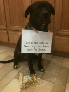 I ate all the tortillas. Now they can't have tacos for dinner.  check out dogshaming.com  you won't stop giggling!!