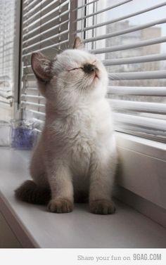 Kitten #kitten gold_malachite  Kitten #kitten  Kitten #kitten style