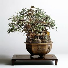 another cool bonsai