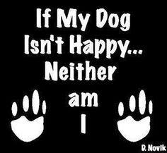 Nice doggie words