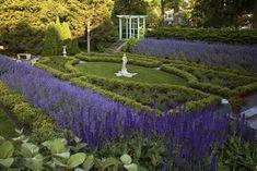 illinoi, purple flowers, garden borders, formal gardens, courtyard gardens, perennial plants, garden design ideas, tradit landscap, purple garden