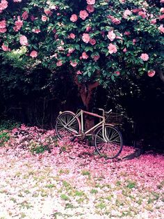 Bike rides and blossoms