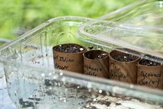 starting seeds in toilet paper rolls. Get more great information and tips about starting tomato seeds at http://www.tomatodirt.com/grow-tomatoes-from-seeds.html.