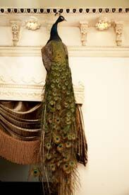 "Taxidermy .... peacock on the door frame...decorating with a ""twist"" and whimsy....Todd Selby photograph"