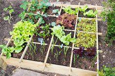 41 Eco-Friendly Tips to Save Cash @Integrative Nutrition #IINResolutions #holistichealth #getreal www?healthcoachdebbie.com