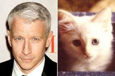 Beverly Ribaudo's cat, Little Bit.