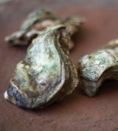 Sweet and sea-fresh, Koh Samui oysters offer a flavour seafood lovers can't miss.