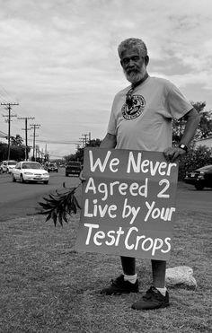 GMO foods.