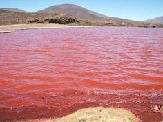 03 Pink Lake in Senegal Retba