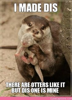 I Made Dis, There Are Otters Like It but Dis One is Mine |