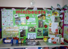 Minibeasts from Clare