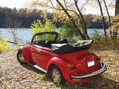 Love, love, love VW Beetles!!