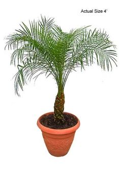 Houseplants that purify the air
