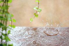 rain photography, such a beautiful photo!