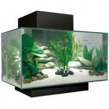 Fluval EDGE aquarium 23L. I wouldn't suggest the  Fluval Edge 23L aquarium  for goldfish because goldfish eventually grow fairly large, perfect for guppies and other colourful little fish though.