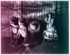 Adjie the Lion Tamer. 11x14 Vintage Circus by curiousprints, $15.00