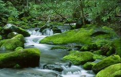 Mossy stream.