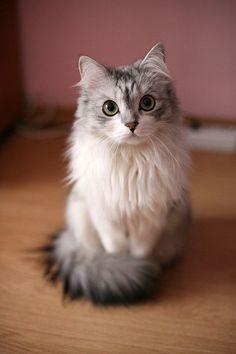 Kitty =d
