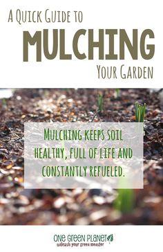 http://onegr.pl/1s8QBa5 #vegan #vegetarian #mulch #grow #garden