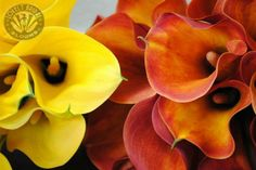 Calla lily bouquets created by Lovely Bridal Blooms