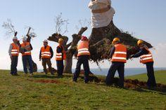 Olive trees. Temes S.A. - Costa Navarino, Greece / Finalist, Destination Award