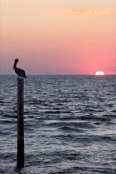 Alabama Gulf Coast