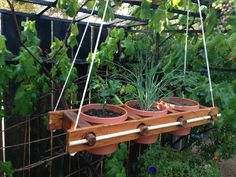 Hanging Planter with 3 slots for herbs by BrightValleyGardens, $69.00