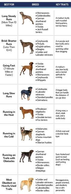dogs for runners, workout with dog, fitness and pets, dog breed, runners world, good running dogs, dogs for running, dog workout, dogs runner