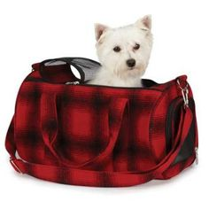 kingston wishes pugsley has this carrier @Michelle Warren