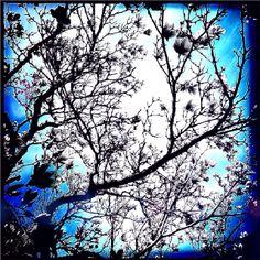 feeling blue http://marc2u.tumblr.com