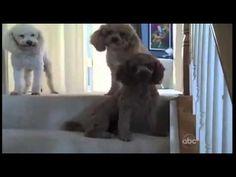 Top 10 Guiltiest Dogs <3
