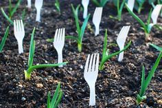 Forks to keep cats out of new beds.  It works great, but the first year I did it a neighbor asked me when the knives and spoons would sprout....