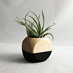 Geometric Air Plant Cube Planter With Tillandsia by seaandasters
