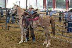 Horsemen Jonathan Field from Canada