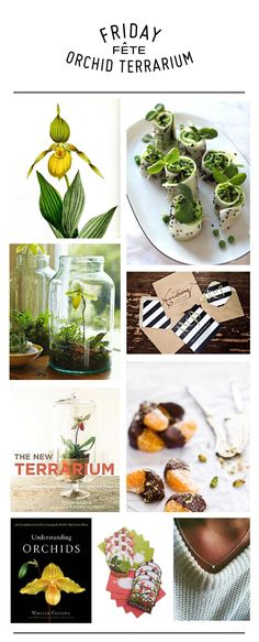 DIY terrarium and orchid party