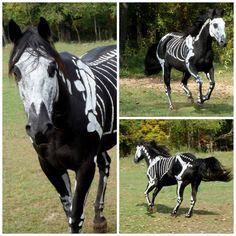 Horses get to dress up for halloween too poni, halloween costumes, bone, dress up, paint, horse costumes, black horses, skeleton, happy halloween