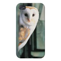 Barn Owl (Tyto alba) Covers For iPhone 4