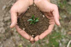 testing soil quality soil pH values1