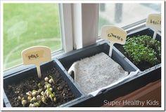 growing micro greens