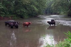 """""""Always drink upstream from the herd."""" -- Cowboy Proverb"""