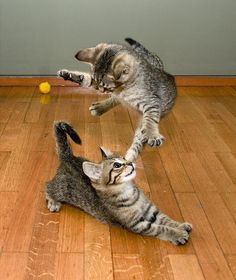 kittens playing :)