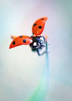 Jet pack * by BLOAS Meven, via 500px