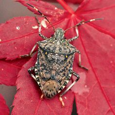 How to keep stink bugs from destroying your garden. | From Organic Gardening