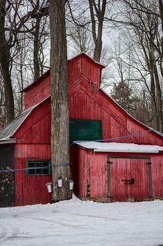 Sugar shack, Montérégie, Québec | Tapped maple tree and barn