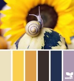 natural | colour palette
