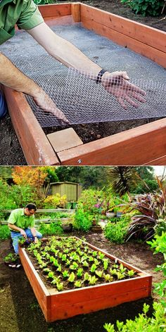 Line the bottom of your raised bed with chicken wire before you add soil & compost to keep out critters!****FOLLOW OUR UNIQUE GARDENING BOARDS AT www.pinterest.com/earthwormtec*****FOLLOW us on www.facebook.com/earthwormtec & www.google.com/+earthwormtechnologies for great organic gardening tips #gardeningtips #raisedbed
