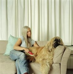 How to Remove Dog Hair From Couch Cushions